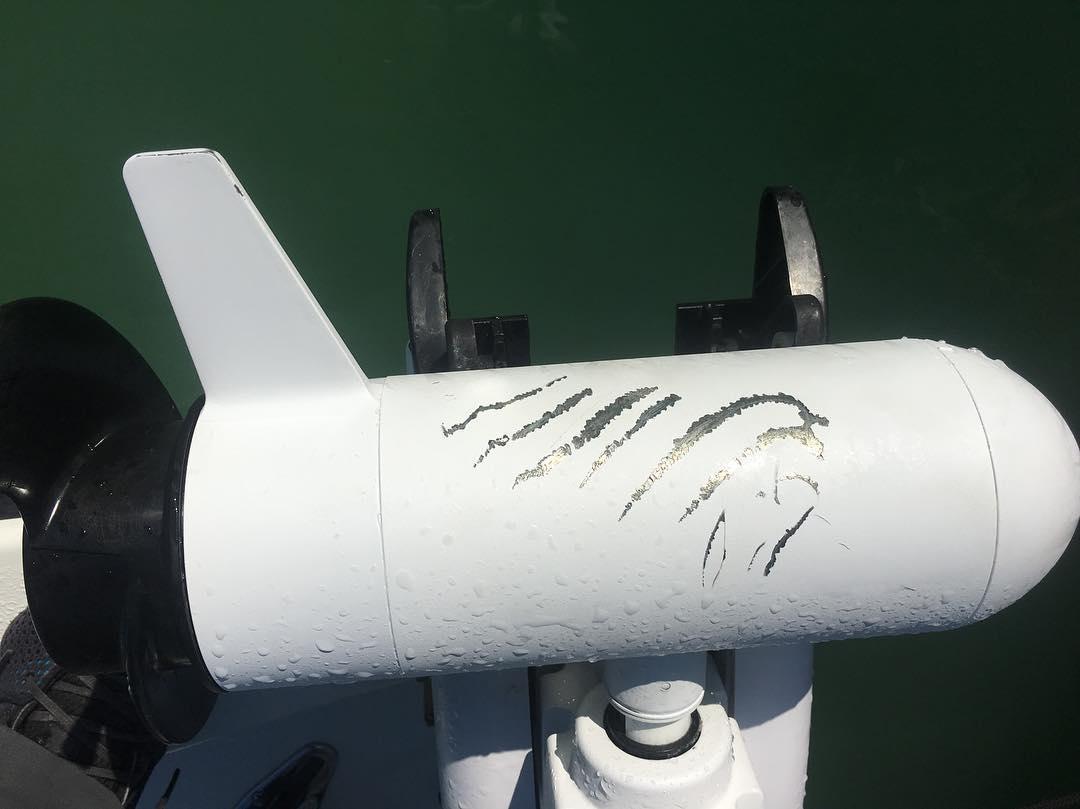 Minnkota 1, bull shark 0. #rustyflycharters #skinnywaterculture #sharkattack
