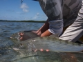 Double bonefish